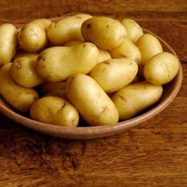 Producción convencional y cultivo ecológico de las patatas