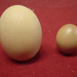 Composición de un huevo