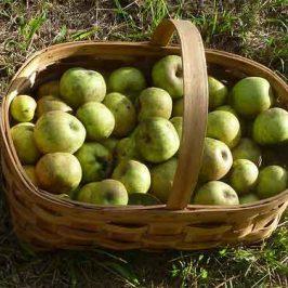 Mousse de manzanas y canela