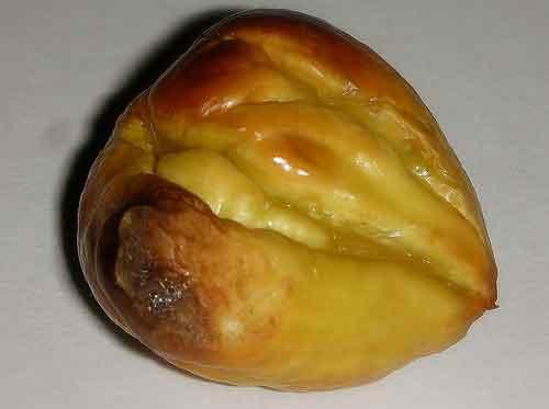 Arrope uvate, conservar castañas y exceso de sal. Sabiduría de la abuela