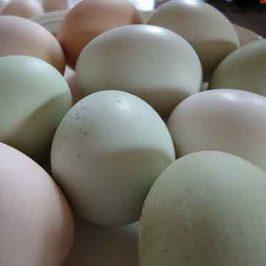 Huevos escalfados al queso